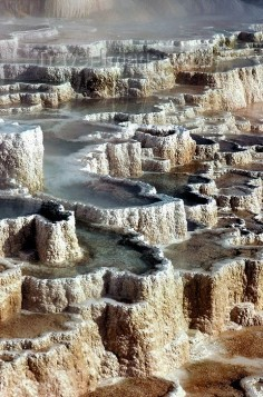 Yellowstone NP, Mammoth Hot Springs Terrace