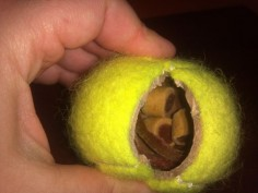 10 Brilliant Hacks Every Dog Owner Should Know: Fill a tennis ball with treats!