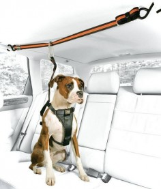 10 Useful Car Accessories for Road-Tripping with Your Pooch. Dog lovers you NEED to see