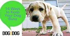 14 Ways to Keep Your Dog Busy
