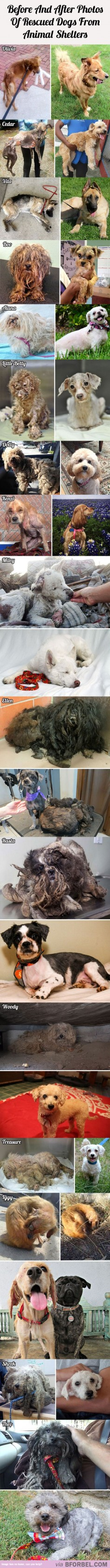 16 Before And After Photos Of Rescued Dogs From Animal Shelters…