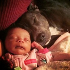18 Pit Bulls Who Really, Really Love Their Human Babies