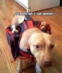 2 Sub Woofers! Priceless.,,I use to have the best Pitbull that ever