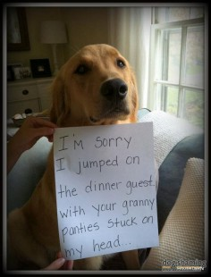 21 of the Greatest DogShaming Pics: HIDE YO' UNDERWEAR -  made me laugh wayyyy too loud!! LOL!!