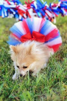 4th of July Fluffy Custom Dog tutu choose your by IzzysCouture, $
