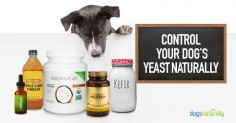 5 Natural Solutions For Yeast In Dogs - Dogs Naturally Magazine