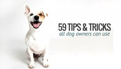 59 Simple Dog Care Tips All Dog Owners Can Use