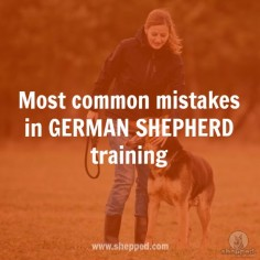 6 common training mistakes that most German Shepherd owners make  #germanshepherd #gsdtraining