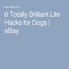 8 Totally Brilliant Life Hacks for Dogs | eBay