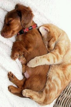 9 cats who simply cannot deny their affection for dogs