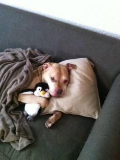 """A dog who is taking a """"sick day"""" to spend more time with his penguin. Awww :D"""