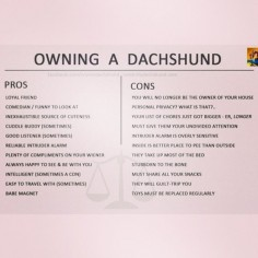 A funny little Pros and Cons list of owning a Dachshund by Crusoe the Celebrity Dachshund #dachshund #doxie #sausagedog #weinerdog #crusoe #prosandcons This is all so very true! @Irene Hoffman Hoffman Hoffman Mediavilla Fuentes @Rachel C