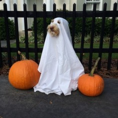 A ghost! | 27 Dog Halloween Costumes You'll Want To Steal For Yourself