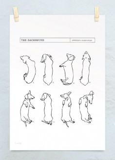 A3 Dachshund Sleep Study Art Print. Illustrations of my pet dachshund's sleeping postions in black on white. $, via Etsy.