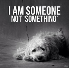 ABSOLUTELY!!! STOP ANIMAL NEGLECT AND ABUSE!!! ❥-Mari Marxuach Parrilla
