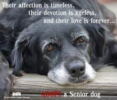 Adopt a senior dog.