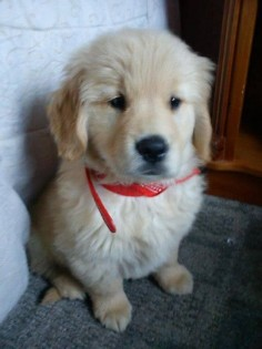 adorable puppy should not be put in a corner