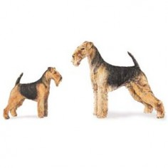 Airedale Terriers and Welsh Terriers are similar in appearance, which brings about many misconceptions about these breeds, and their relation to each other. Common assumptions are that Welsh terriers were bred from Airedales, that Welsh terriers are a newer breed, and/or that Welsh terriers are a smaller version of an Airedale. Many people like the look…
