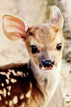 ALGO IMPRESIONANTE. Aunque parezca un animal salvaje, que lo es, es uno de los animales mas adorables del mundo. TE QUIERO CUCUT CAN SALAVIA, GIRONA, CASA RURAL. 2015