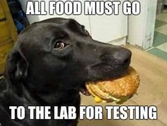 All Food Goes To The Lab For Testing ;) [catanddog ]