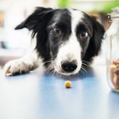 ASPCA veterinarians and behaviorists offer these guidelines regarding your dog's health and daily activities.