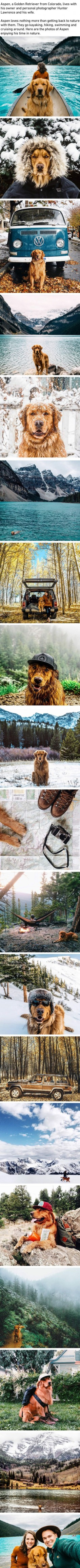 Aspen The Golden Retriever Loves Going On Adventures With His Humans