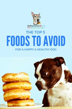 Avoid these foods to keep your furbaby happy & healthy!