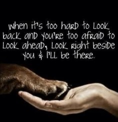 Awe!! I'm seriously s dog lover and I love my dog so much❤️❤️❤️ they r amazing animals