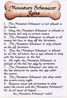 Awesome Mini Schnauzer Rules:  was how Joe started out too!
