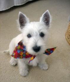 awww cute bandana!!