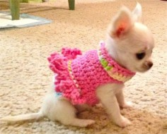 Awwww, such a Chihuahua cutie in a cutie pink frilly top. #chihuahuadaily #teacupdogs #teacupchihuahua
