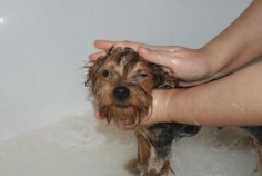 Bathe your dog in a solution of apple cider vinegar for immediate relief.