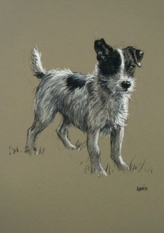 Beautiful Jack Russell Terrier dog LE fine art print 'Mr Alert' from an original chalk and charcoal sketch. $, via Etsy.