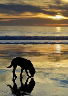 Beautiful photo! even dogs like to relax on the beach!!