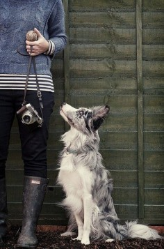 Blue Merle Border Collie - Took the animal planet Dog Breed Questionnaire and got border collie