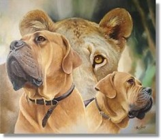 "Boerboel ""a farmer's dog"" - history behind the breed."