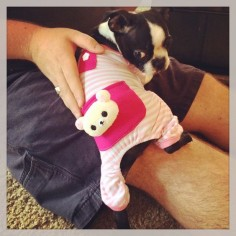 Boston Terriers! I can't even deal with their cuteness!!!