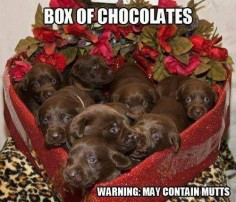 Box of Chocolates may contain mutts