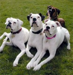 Boxers .. ...I'm partial to white boxers :) beautiful!!