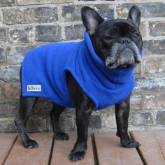 Boys Turtleneck - Royal Blue - French Bulldog Pug Fleece Sweater – Babies & Beasts