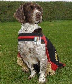 Buster, a nine-year-old English springer spaniel, earned a row of campaign medals for his service in Bosnia, Iraq and Afghanistan as a RAF explosives sniffer dog.