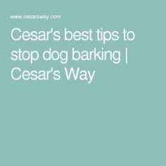 Cesar's best tips to stop dog barking | Cesar's Way