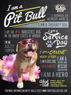 Change of Heart Pit Bull Rescue - Positive Pit Bull poster