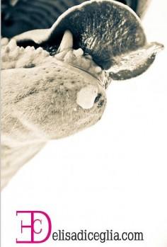Ciro's long tongue)) #Bull #Terrier #Dog #Tongue #Portrait