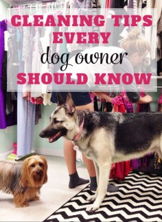 CLEANING TIPS EVERY DOG OWNER SHOULD KNOW: Click for details: