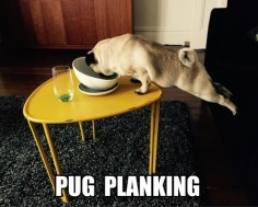 """Click visit site and Check out Best """"Pug"""" T-shirts. This website is outstanding. Tip: You can search """"your name"""" or """"your favorite shirts"""" at search bar on the top."""