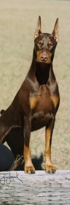 "Click visit site and Check out Cool ""Dobermann"" Shirts. This website is outstanding. Tip: You can search ""your name"" or ""your favorite shirts"" at search bar on the top."