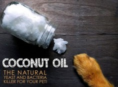 COCONUT OIL KILLS BACTERIA, VIRUSES AND FUNGI IN/ON YOUR PET! Ranked in the top 10 most important food medicines, coconut oil is a must add to your pet's diet! With over 13 Evidence-Based Medicinal Properties, the one we love the most is its yeast-bustin' abilities! The recommended dosage for feeding is: • ½ teaspoon for every 10lbs of body weight daily Or, if using topically, just rub the oil on your hands and apply to your pet's coat (remember not to over do it!). PLANET PAWS