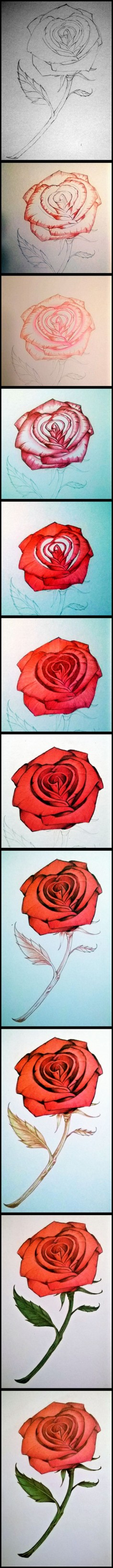 colored pencil rose