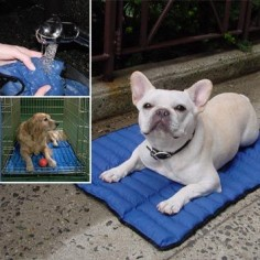 Cooling Mat for puppies in the summer. I just love the Frenchie.